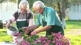 Ανώτεροι κηπουροί που εργάζονται με τα λουλούδια απόθεμα βίντεο