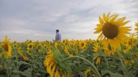 Ανώτερος αγρότης ατόμων που εξετάζει τη συγκομιδή των ηλίανθων στο σε αργή κίνηση βίντεο τομέων άτομο αγροτών που στέκεται σε ένα απόθεμα βίντεο
