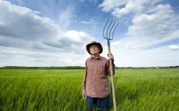 Ανώτερος αγρότης στον τομέα κριθαριού Στοκ Εικόνα