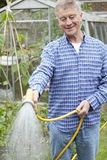 Ανώτερος κήπος ποτίσματος ατόμων με Hosepipe στοκ φωτογραφία