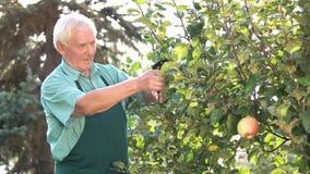 Ανώτερος κηπουρός με την εργασία ψαλιδιού φιλμ μικρού μήκους