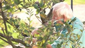 Ανώτερος κηπουρός με το ψαλίδι απόθεμα βίντεο