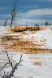 Ανώτερος ορυκτός σχηματισμός περιοχής πεζουλιών και νεκρά δέντρα κοντά στις μαμμούθ καυτές ανοίξεις στο εθνικό πάρκο Yellowstone, Στοκ Φωτογραφία