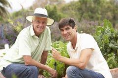 Ανώτερος πατέρας και ενήλικος γιος που εργάζονται στο φυτικό κήπο Στοκ Φωτογραφίες