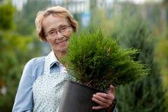 Ανώτερος υπάλληλος γυναικών με το θάμνο Στοκ εικόνα με δικαίωμα ελεύθερης χρήσης