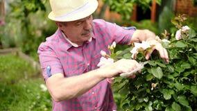 Ανώτερο άτομο στα τέμνοντα τριαντάφυλλα κήπων φιλμ μικρού μήκους