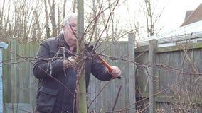 ανώτερο δέντρο κλαδεύματ&o Μπροστινή όψη απόθεμα βίντεο