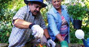 Ανώτερο ζεύγος που φυτεύει τις εγκαταστάσεις φιλμ μικρού μήκους