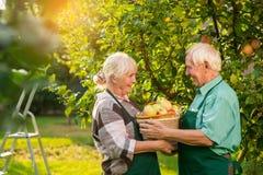 Ανώτερο καλάθι μήλων εκμετάλλευσης ζευγών Στοκ Εικόνα