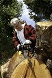 Ανώτερο κολόβωμα δέντρων ατόμων τέμνον με το αλυσιδοπρίονο Στοκ φωτογραφία με δικαίωμα ελεύθερης χρήσης