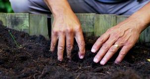 Ανώτερο σκάψιμο ατόμων στο χώμα για να σκάψει τις εγκαταστάσεις απόθεμα βίντεο
