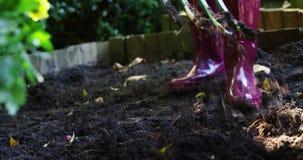 Ανώτερο σκάψιμο γυναικών με το δίκρανο κήπων απόθεμα βίντεο