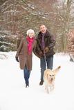 Ανώτερο σκυλί περπατήματος ζεύγους μέσω της χιονώδους δασώδους περιοχής Στοκ Φωτογραφίες