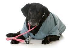 Ανώτερο σκυλί στοκ φωτογραφίες