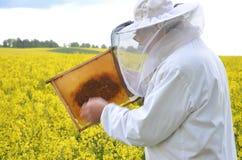 Ανώτερο apiarist που εργάζεται στον ανθίζοντας τομέα συναπόσπορων Στοκ Φωτογραφία