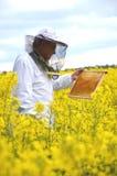 Ανώτερο apiarist που εργάζεται στον ανθίζοντας τομέα συναπόσπορων Στοκ φωτογραφίες με δικαίωμα ελεύθερης χρήσης