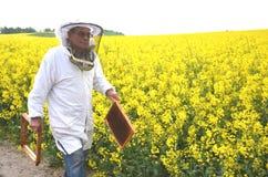 Ανώτερο apiarist που εργάζεται στον ανθίζοντας τομέα συναπόσπορων Στοκ Φωτογραφίες