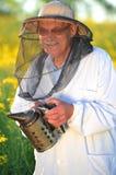 Ανώτερο apiarist που εργάζεται στον ανθίζοντας τομέα συναπόσπορων Στοκ εικόνες με δικαίωμα ελεύθερης χρήσης