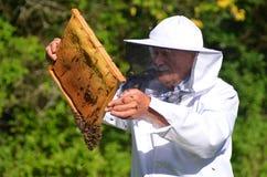 Ανώτερο apiarist που κάνει την επιθεώρηση στο μελισσουργείο Στοκ Εικόνες