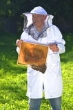Ανώτερο apiarist που κάνει την επιθεώρηση στο μελισσουργείο Στοκ φωτογραφία με δικαίωμα ελεύθερης χρήσης