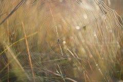 Απέραντος Ιστός. Στοκ εικόνες με δικαίωμα ελεύθερης χρήσης