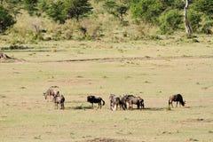 Απέραντο ανοικτό λιβάδι σαβανών σε Masai Mara Στοκ φωτογραφία με δικαίωμα ελεύθερης χρήσης