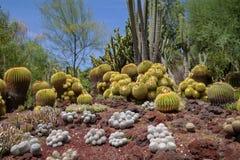 Απίστευτος κήπος κάκτων ερήμων με τους πολλαπλάσιους τύπους κάκτων την άνοιξη ή καλοκαιριών στοκ εικόνα με δικαίωμα ελεύθερης χρήσης