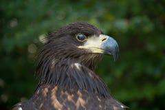 Απαγορεύοντας πουλί Στοκ εικόνες με δικαίωμα ελεύθερης χρήσης
