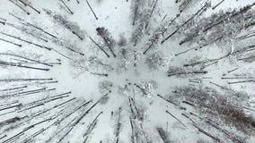 Απανθρακωμένος χειμώνας της Αλάσκας κορμών δέντρων καταστροφής δασικής πυρκαγιάς Buned απόθεμα βίντεο