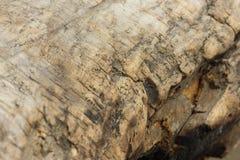 απανθρακωμένο δάσος Στοκ φωτογραφίες με δικαίωμα ελεύθερης χρήσης