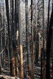 απανθρακωμένο δάσος Στοκ Φωτογραφίες