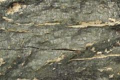 Απανθρακωμένο ξύλινο υπόβαθρο σύστασης Στοκ Εικόνες