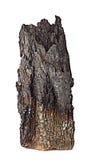 Απανθρακωμένο ξύλο με το φλοιό Στοκ Εικόνες