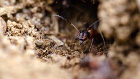 απαντήσεων Έντομα στις άγρια περιοχές κλείστε επάνω στοκ φωτογραφία με δικαίωμα ελεύθερης χρήσης
