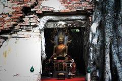 Απαρατήρητη Ταϊλάνδη, καταστροφές του παλαιού ναού με μια ρίζα δέντρων Bodhi Στοκ Φωτογραφίες