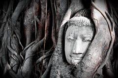 Απαρατήρητος του κεφαλιού της Ταϊλάνδης Βούδας Στοκ Φωτογραφίες