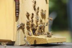 Απασχολημένες μέλισσες μπροστά από την κυψέλη Στοκ φωτογραφία με δικαίωμα ελεύθερης χρήσης