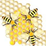 Απασχολημένες μέλισσες Στοκ εικόνα με δικαίωμα ελεύθερης χρήσης