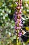 Απασχολημένο Bumblebee Στοκ εικόνα με δικαίωμα ελεύθερης χρήσης