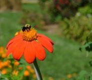 απασχολημένο λουλούδι & Στοκ Εικόνες