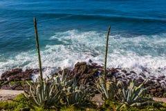 Απατεώνας Σάο ακτών στο νησί του Miguel Σάο Στοκ Εικόνες