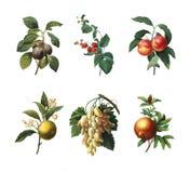 Απεικονίσεις του Pierre-Joseph Reoute Στοκ Εικόνες