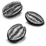 Απεικονίσεις φασολιών καφέ Στοκ φωτογραφία με δικαίωμα ελεύθερης χρήσης
