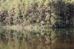 Απεικονίστε το δάσος πεύκων με το έλος στοκ φωτογραφία με δικαίωμα ελεύθερης χρήσης