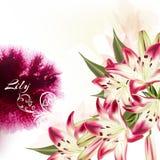 Απεικόνιση ή υπόβαθρο με τα ρόδινα λουλούδια και το watercolor κρίνων Στοκ φωτογραφίες με δικαίωμα ελεύθερης χρήσης