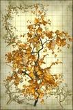 Απεικόνιση γκρέιπφρουτ στοκ φωτογραφία με δικαίωμα ελεύθερης χρήσης