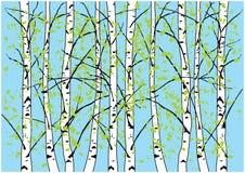 Απεικόνιση δέντρων σημύδων άνοιξη Δάσος και μπλε ουρανός σημύδων Στοκ Εικόνα