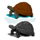 Απεικόνιση διανυσματικού Tortoises, ύφος Woodblock Στοκ Φωτογραφίες