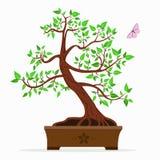 Απεικόνιση ενός δέντρου μπονσάι Στοκ εικόνες με δικαίωμα ελεύθερης χρήσης