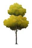 Απεικόνιση ενός δέντρου Στοκ Φωτογραφίες